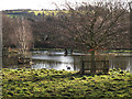 TQ5365 : River Darent in flood, at Home Farm by Stephen Craven