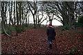 TF6633 : Snettisham Common in January by Rob Johnson