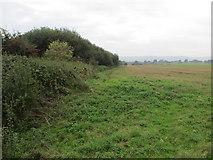 TQ1913 : Path to Wyckham Farm by Peter Holmes