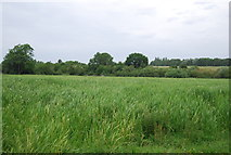 TG1808 : Bowthorpe Marsh Nature Reserve by N Chadwick