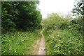 TG1808 : Yare Valley Walk by N Chadwick