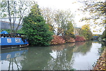 TQ2182 : Autumn colours, Grand Union Canal by N Chadwick