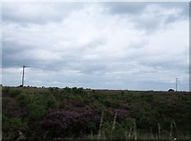 N2020 : Power lines crossing bogland north of the R357 by Eric Jones