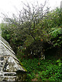 SX2084 : The cloutie tree near St Clether's Well by Chris Gunns