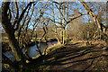 NZ1746 : Path beside River Browney by Trevor Littlewood
