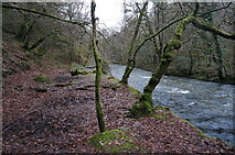 SX4970 : River Walkham and path by jeff collins