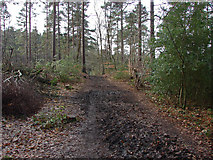 SU8363 : Bridleway, Edgbarrow Woods by Alan Hunt