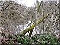 SJ9494 : Gower Hey Lake by Gerald England