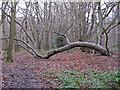 TL7906 : Fallen Tree by Roger Jones