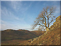 NY5301 : A tree above Bannisdale by Karl and Ali