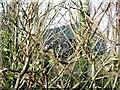 ST6865 : New barn, Ashton Hill Farm by Alex McGregor