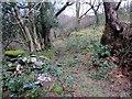 SN6409 : Heol Cwm Cathan Isaf Road by Alan Richards