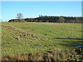 NY9275 : Farmland and woodland west of Swinburne Castle by Mike Quinn