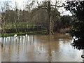 SP2965 : River Avon by Emscote Gardens, Warwick 2014, January 16, 13:44 by Robin Stott