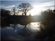 NT6578 : Rural East Lothian ; Walking Beside The Biel Water, West Barns by Richard West
