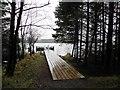 H5775 : Board-walk, Loughmacrory by Kenneth  Allen