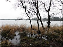 H5776 : Trees, Loughmacrory Lough by Kenneth  Allen