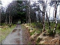 H5776 : Loughside path at Altdrumman by Kenneth  Allen