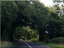 N8188 : Arched trees on the R162 north of Nobber by Eric Jones