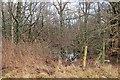 NS5673 : Wetland wood, Auchenhowie Road by Richard Webb