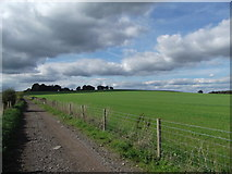 TQ1913 : Downs Link - north of Bamber by easthantsxc