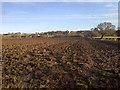 NZ4827 : Greatham by Mick Garratt