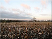 SJ8940 : Fields north of Crowcroft Cottages by Alex McGregor