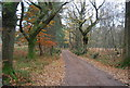SU8630 : New Lipchis Way, Stanley Common by N Chadwick