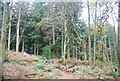 SU8430 : Conifers, Stanley Common by N Chadwick