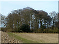 SU7985 : A corner of North Cot Wood by Robin Webster