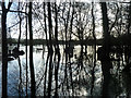 SU8083 : Flooded wood by old ferry landing by Robin Webster