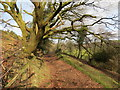 SN6403 : Llwybr Felindre Path by Alan Richards