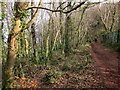 SX9157 : Coast path in Marridge Wood by Derek Harper