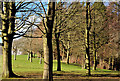 J3269 : Winter trees, Barnett Demesne, Belfast by Albert Bridge