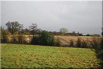 SJ8234 : South of Cotes Heath by N Chadwick