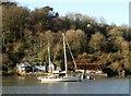 SX8654 : Yacht at Dittisham by Derek Harper