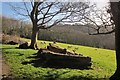 SX8754 : Sheep near Greenway by Derek Harper