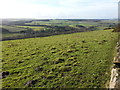 NZ0558 : Grazing Land at Apperley Bank by Clive Nicholson
