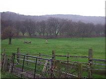 NZ5719 : Farmland and woodland near Lazenby by JThomas