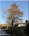 SX8586 : Centre of Doddiscombsleigh by Derek Harper