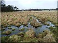 SJ7580 : Boggy ground, Tatton Park by Christine Johnstone