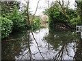 SU8987 : Floods in The Avenue by Alex McGregor