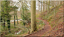 J3268 : Path, Minnowburn, Belfast - February 2014(2) by Albert Bridge
