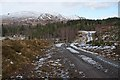 NN5388 : Forestry track, Ardverikie by Dorothy Carse
