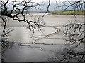 SX4461 : Rivulet across mud, Tavy estuary by Derek Harper
