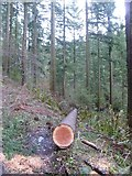 NY2427 : Fallen Tree by Michael Graham