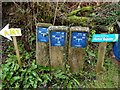 SO5416 : Hydrant markers in Little Doward by Jaggery