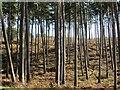 SJ9714 : Badger's Hills by Richard Webb