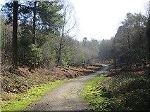 SJ9715 : Logging road off Pottal Slade by Richard Webb