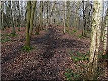SE1839 : Path in Dawson Wood by Chris Heaton